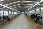 Китай Автоматизация и санитарные Pre-сделанные системы стального структурного Cowshed обрамляя завод